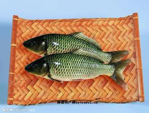 鄂爾多斯黃河鯉魚