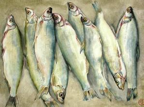 呼倫湖白魚