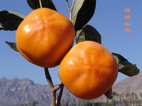 张坊镇磨盘柿