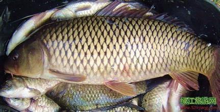 寬甸鴨綠江鯉魚