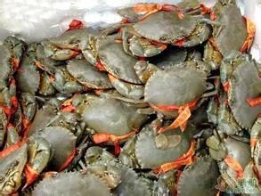 三门湾锯缘青蟹