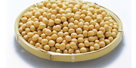 敦化小粒黄豆