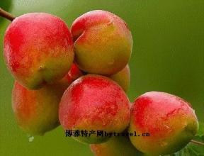 伊通景台大红杏