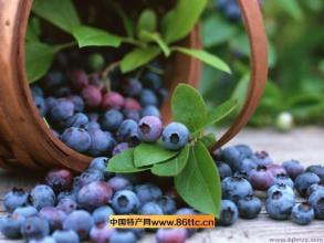 五营镇蓝莓
