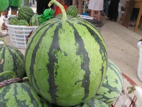 三十崗西瓜