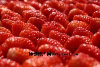 泗縣墩集草莓