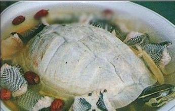 龜蛇大補湯