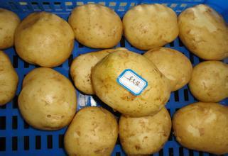 巫溪脱毒马铃薯