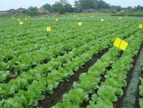 桂林無公害蔬菜