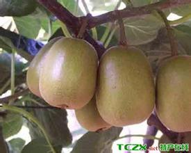 万州红阳猕猴桃