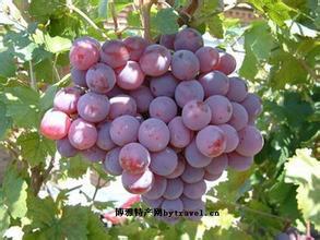 华蓥山葡萄