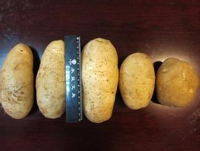 康保馬鈴薯