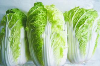榆中大白菜