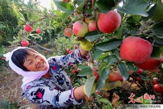 新疆兵团六团苹果
