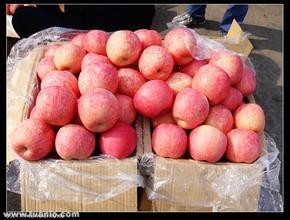 六團紅富士蘋果