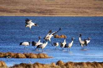大山包黑頸鶴國家級自然保護區