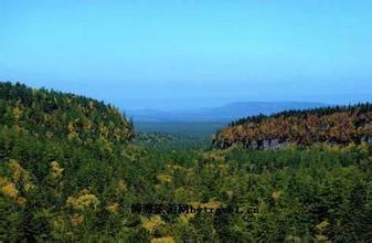 二河沟原始森林群落