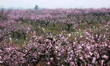 枝江万亩桃花园