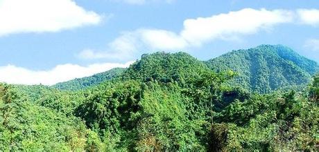大王嶺原始森林
