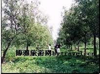 枣庄北郊园林