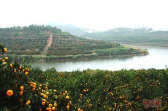 羅里石蜜桔生態園