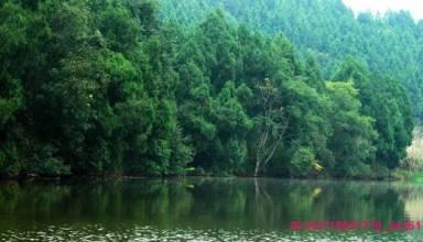 五凤山森林公园