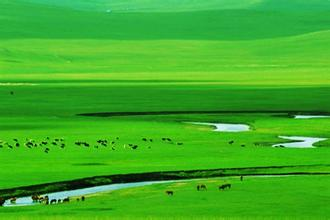 鄂爾多斯大草原