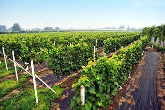 世界葡萄博览园