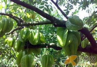 熱帶水果花卉植物觀賞園
