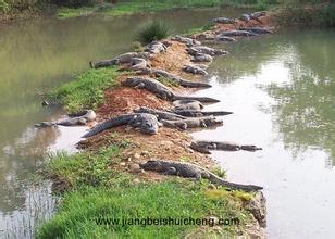 南泰鱷魚湖動物園