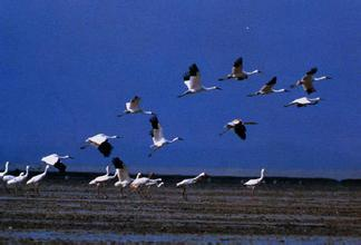 東灘候鳥保護區