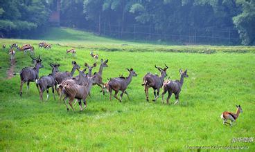 重慶野生動物世界