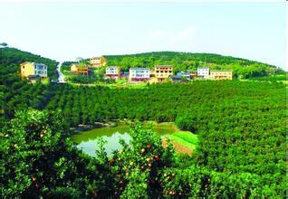 中國柑橘城