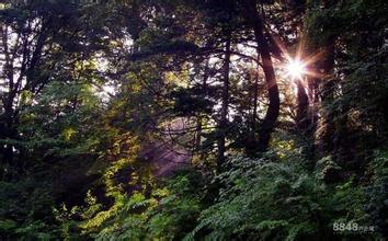 苍龙山原始森林公园