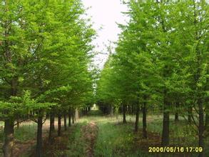 李埝林场森林公园