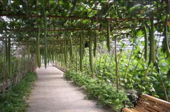 凉水有机生态农业园