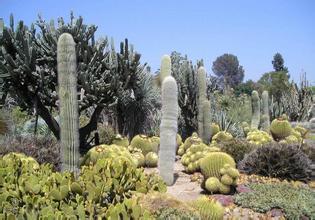 吐魯番沙漠植物園