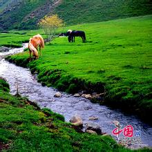 塔爾巴哈臺山間夏牧場