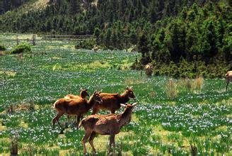 寿鹿山国家森林公园