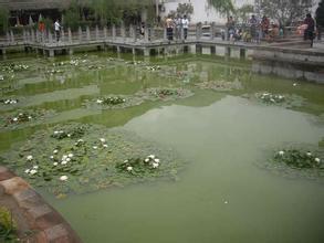 隴南蓮湖公園